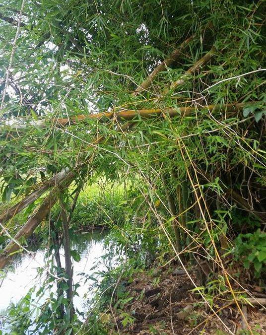 Rohmaterial TwoStep Fussfeile & Bambus Nagelfeile